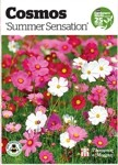 Free pack of Cosmos seeds