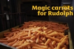 Free carrots fro Rudoph and the reindeer from Morrisons